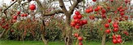 افزایش تولیدات سالیانه باغی به 22 میلیون تن
