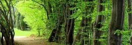 جنگلهای زاگرس به عنوان اراضی ملی تثبیت و سند صادر میشود
