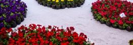 پانزدهمین نمایشگاه بین المللی گل وگیاه افتتاح شد