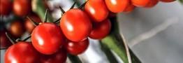 دلایل افزایش ۵۰ درصدی قیمت خیار و گوجهفرنگی