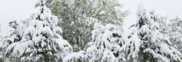 برف و کولاک استان اردبیل را فرا گرفت / مردم از سفرهای غیر ضروری خوداری کنند