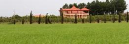 «ویلاسازی»، فاجعه ای که کشاورزی را می بلعد